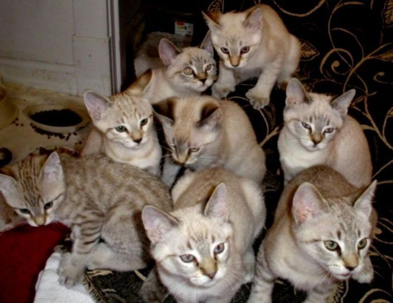 Jenis Ras Kucing Dng Huruf Awal D E F G Persia Jenis Kucing G1 Kucing Biz